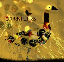 bonitas plumas. A Illustration project by Jorgina Miralles Castelló - Feb 16 2010 06:10 PM