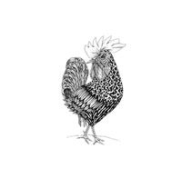 Ilustración / Códice. Um projeto de Ilustração de Jhonatan Medina         - 05.04.2014