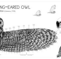 Long-eared owl wing. Un proyecto de Diseño e Ilustración de Joana Araújo Bruno - 16-07-2013