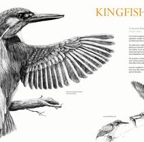Common kingfisher wing. Um projeto de Design, Ilustração e Artes plásticas de Joana Araújo Bruno         - 11.08.2014