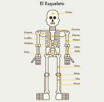 Cuerpo Humano. A Design&Illustration project by David  Serrano         - 13.11.2014