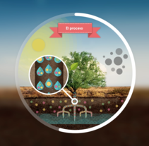 Photosynthesis - Animated infographics. A Motion Graphics, Animation, and Graphic Design project by Riccardo Marras         - 04.05.2015