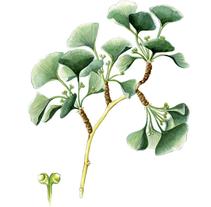 Ilustraciones botánicas . Un proyecto de Ilustración de base12 - 21-02-2016