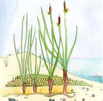 Platja deserta. A Illustration project by Sandra Uve          - 23.03.2016