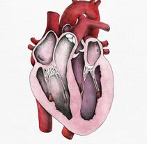"""""""Heart anatomy"""", un proyecto para Il·lustraciència. Um projeto de Ilustração e Educação de Laura Macías Álvarez - 28-02-2015"""