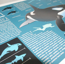 Killer Whale Inphography . A Illustration, Editorial Design, Graphic Design&Infographics project by Victor Eduardo Manzanillo Piña         - 07.10.2016