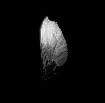 Paisajes de luz. Ala mosca.. Un proyecto de Fotografía de Estela García         - 28.03.2017