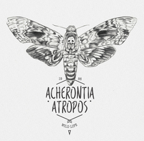 ACHERONTIA ATROPOS. A Illustration project by miguel sastre - 30-08-2017